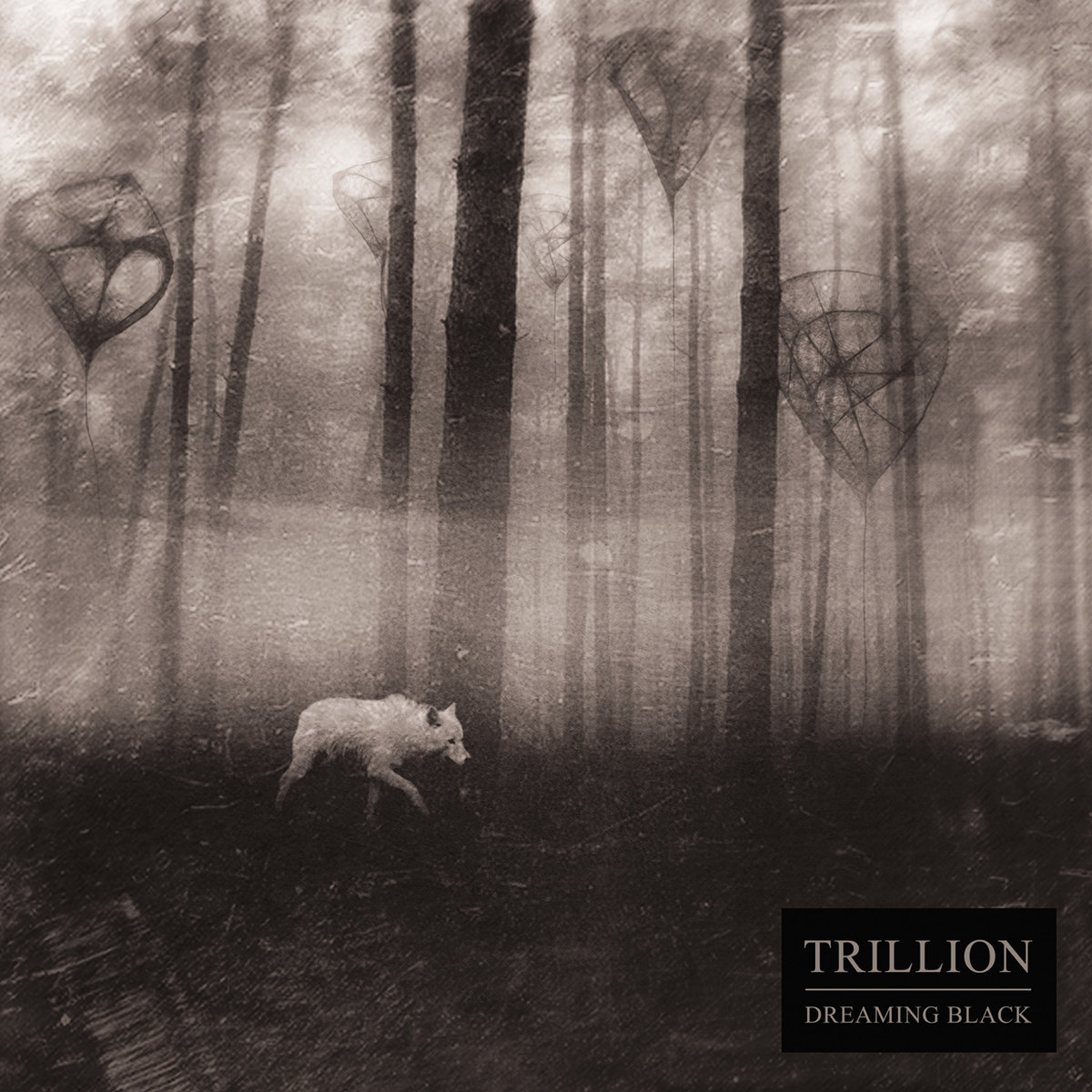 trillion - dreaming black